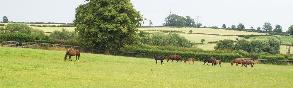 Manor Farm Stud, Braunston, Oakham Rutland LE15 8QR